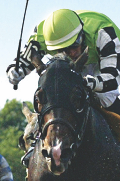 close up of horse and rider